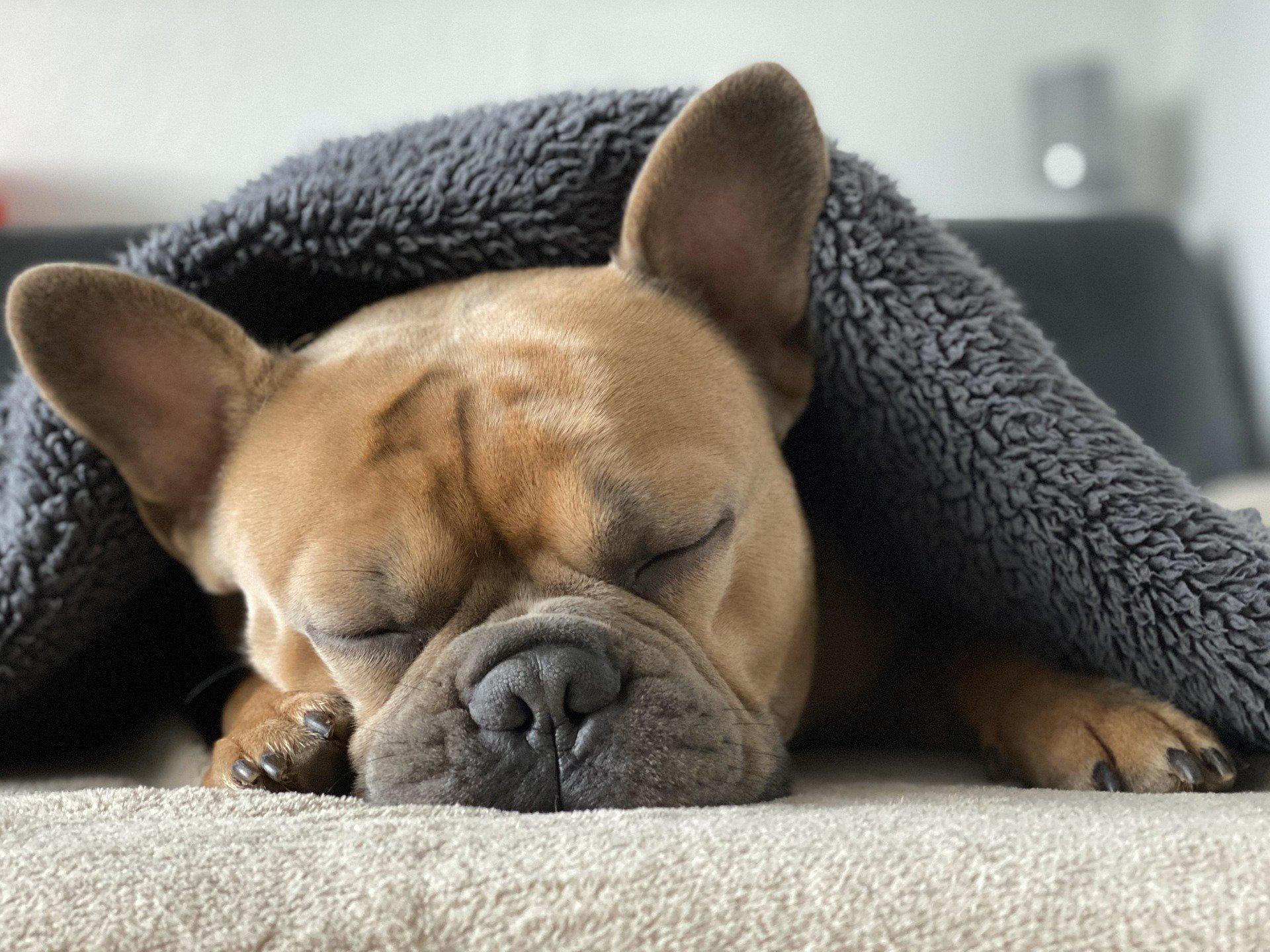 Schlaftracking klappt mit NapBot jetzt noch besser