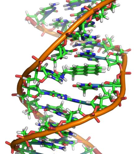 DNA: Abbildung von Zephrys (Richard Wheeler)