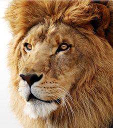 OS X 10.7 Lion auf Macs nach Festplattentausch neu installieren